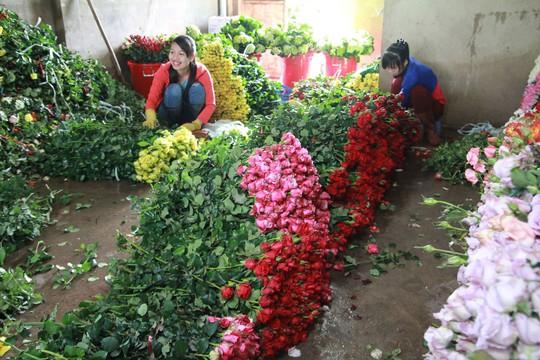 Giá hoa hồng Đà Lạt tăng 3 lần trước lễ 20-10 - Ảnh 1.