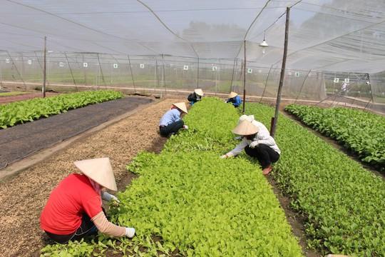Kết quả hình ảnh cho hà nội lên kế hoạch phát triển nông nghiệp hữu cơ