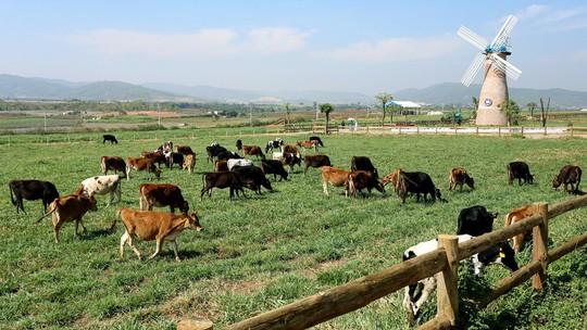 F&N Dairy lại đăng ký mua hơn 17,4 triệu cổ phiếu của Vinamilk - Ảnh 1.