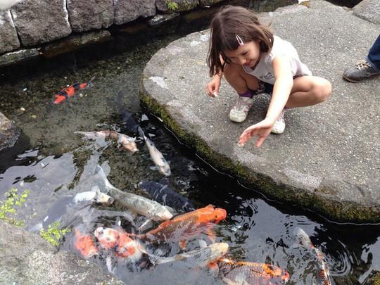 Du khách ngạc nhiên khi thấy cá koi sống dưới rãnh nước ở ngôi làng Nhật Bản - Ảnh 3.