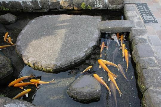Du khách ngạc nhiên khi thấy cá koi sống dưới rãnh nước ở ngôi làng Nhật Bản - Ảnh 4.