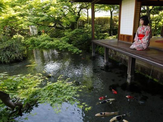 Du khách ngạc nhiên khi thấy cá koi sống dưới rãnh nước ở ngôi làng Nhật Bản - Ảnh 6.