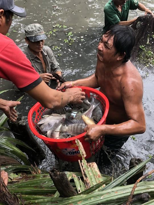 Về Đa Phước, xem người dân thu hoạch cá bên khu liên hợp - Ảnh 2.