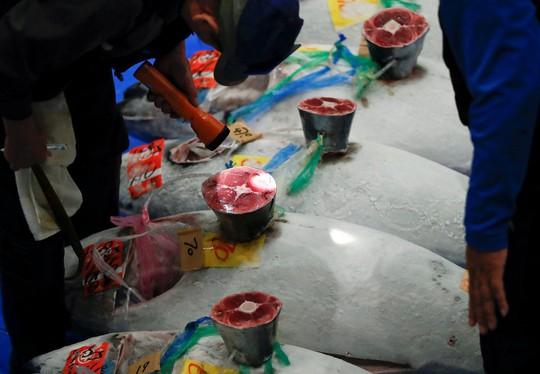 Vì sao chợ cá lớn nhất thế giới ở Nhật gây tranh cãi khi dời địa điểm? - Ảnh 4.