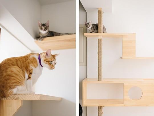 Căn hộ thân thiện dành cho những người yêu mèo - Ảnh 4.