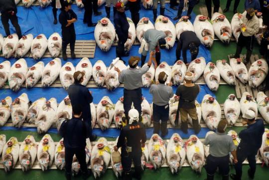 Vì sao chợ cá lớn nhất thế giới ở Nhật gây tranh cãi khi dời địa điểm? - Ảnh 7.