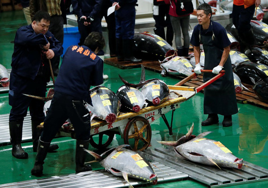Vì sao chợ cá lớn nhất thế giới ở Nhật gây tranh cãi khi dời địa điểm? - Ảnh 9.