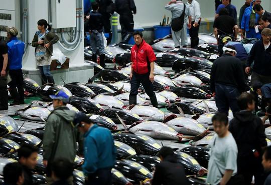 Vì sao chợ cá lớn nhất thế giới ở Nhật gây tranh cãi khi dời địa điểm? - Ảnh 10.
