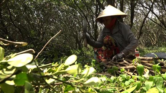 Bưởi Năm Roi chết rụng trái đầy vườn, dân khóc ròng bán 1.500 đồng/kg để làm nem - Ảnh 8.