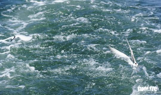 Hải âu săn mồi trên biển Kiên Giang - Ảnh 2.