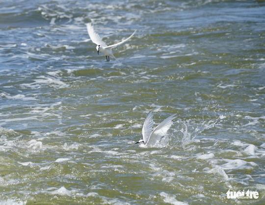 Hải âu săn mồi trên biển Kiên Giang - Ảnh 9.