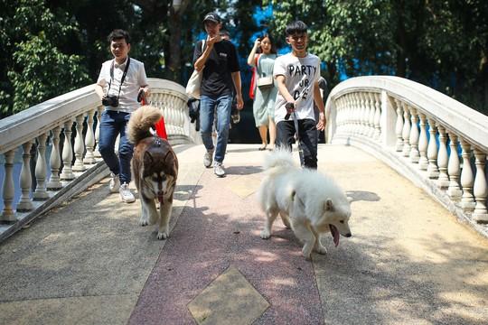 Độc đáo Lễ hội cún cưng Sài Gòn - Ảnh 4.