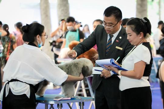 Độc đáo Lễ hội cún cưng Sài Gòn - Ảnh 15.