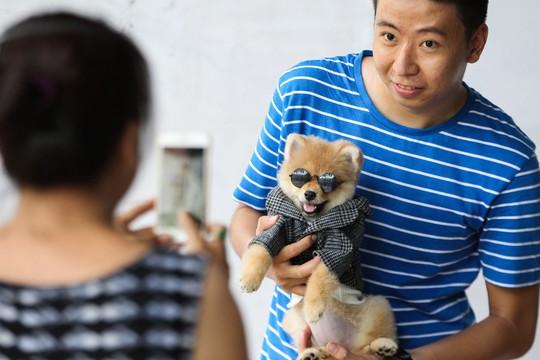 Độc đáo Lễ hội cún cưng Sài Gòn - Ảnh 8.