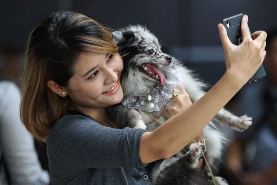 Độc đáo Lễ hội cún cưng Sài Gòn - Ảnh 9.