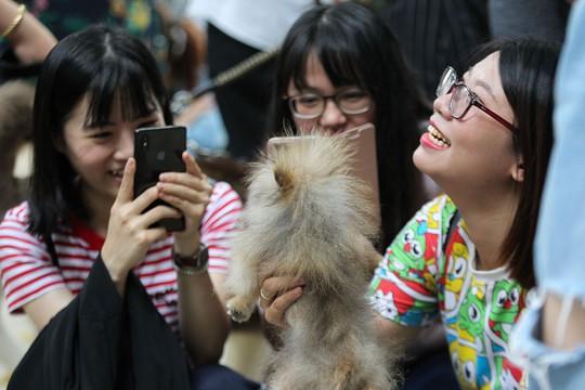 Độc đáo Lễ hội cún cưng Sài Gòn - Ảnh 3.