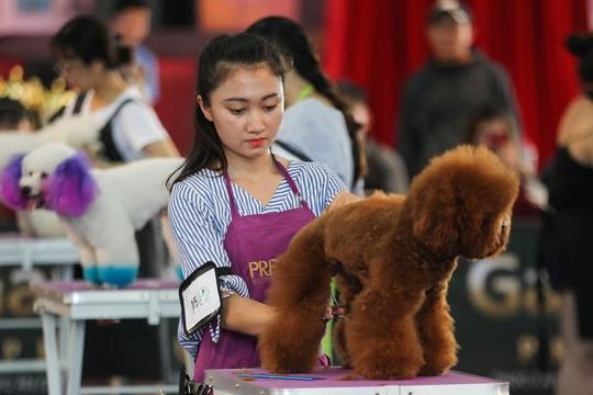 Độc đáo Lễ hội cún cưng Sài Gòn - Ảnh 14.