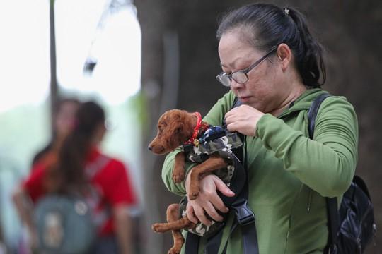 Độc đáo Lễ hội cún cưng Sài Gòn - Ảnh 10.