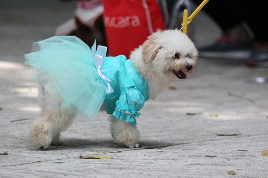 Độc đáo Lễ hội cún cưng Sài Gòn - Ảnh 7.