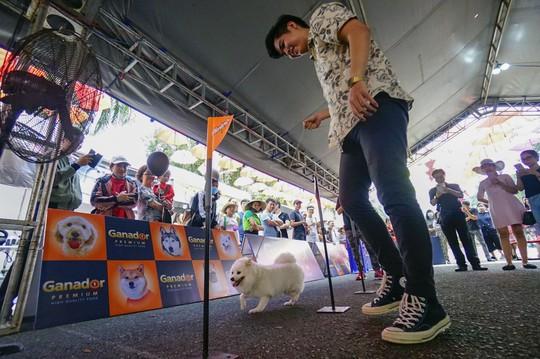 Độc đáo Lễ hội cún cưng Sài Gòn - Ảnh 13.