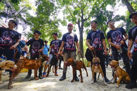Độc đáo Lễ hội cún cưng Sài Gòn - Ảnh 11.