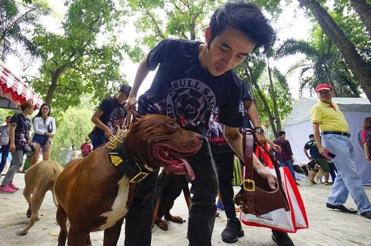 Độc đáo Lễ hội cún cưng Sài Gòn - Ảnh 12.