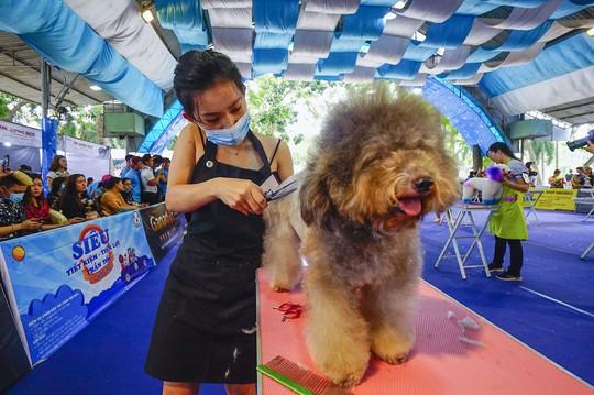 Độc đáo Lễ hội cún cưng Sài Gòn - Ảnh 16.