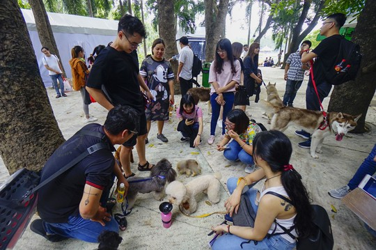 Độc đáo Lễ hội cún cưng Sài Gòn - Ảnh 1.