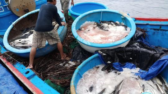 Tôm hùm, cá bớp chết la liệt, người nuôi chớp mắt mất tiền tỉ