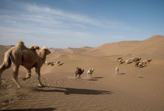 Khung cảnh ấn tượng trên con đường tơ lụa dài 6.500 km - Ảnh 2.