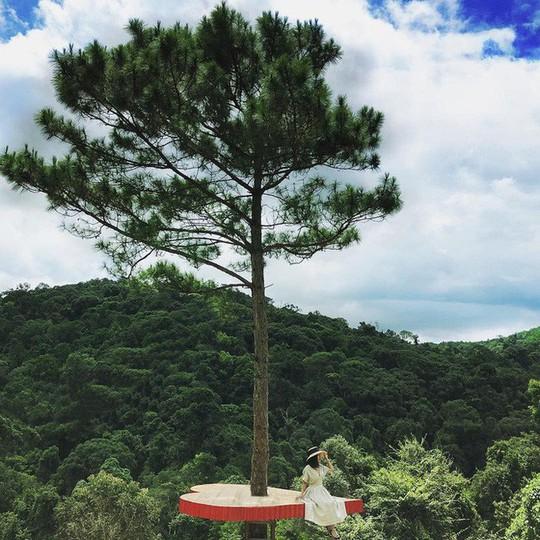 """Dân du lịch háo hức """"check-in"""" cây thông độc đáo ở Đà Lạt - Ảnh 2."""