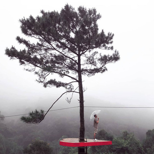 """Dân du lịch háo hức """"check-in"""" cây thông độc đáo ở Đà Lạt - Ảnh 3."""