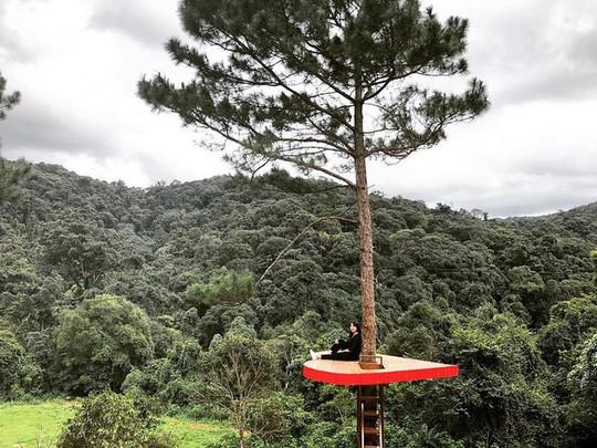 """Dân du lịch háo hức """"check-in"""" cây thông độc đáo ở Đà Lạt - Ảnh 4."""