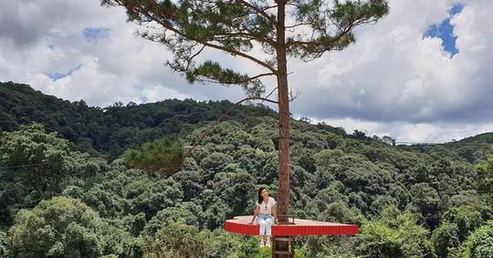 """Dân du lịch háo hức """"check-in"""" cây thông độc đáo ở Đà Lạt - Ảnh 5."""