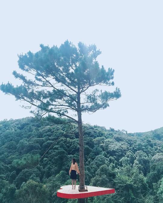 """Dân du lịch háo hức """"check-in"""" cây thông độc đáo ở Đà Lạt - Ảnh 6."""