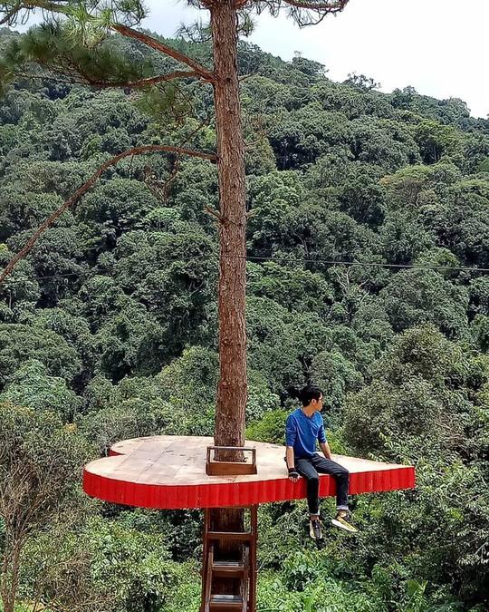 """Dân du lịch háo hức """"check-in"""" cây thông độc đáo ở Đà Lạt - Ảnh 8."""