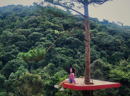 """Dân du lịch háo hức """"check-in"""" cây thông độc đáo ở Đà Lạt - Ảnh 9."""