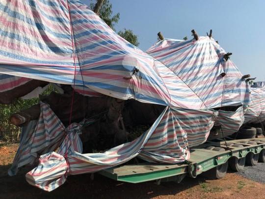 Bắt cây quái thú  lọt nhiều trạm CSGT miền Trung - Ảnh 2.