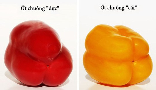 Cách chọn trái cây tươi ngon bạn nên biết - Ảnh 3.