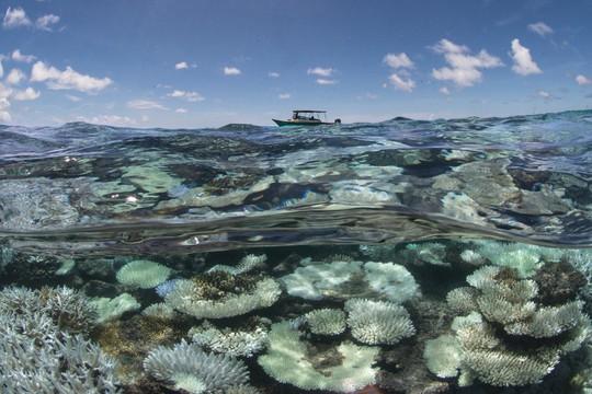 Đại dương nóng bất thường đe dọa trái đất - Ảnh 1.