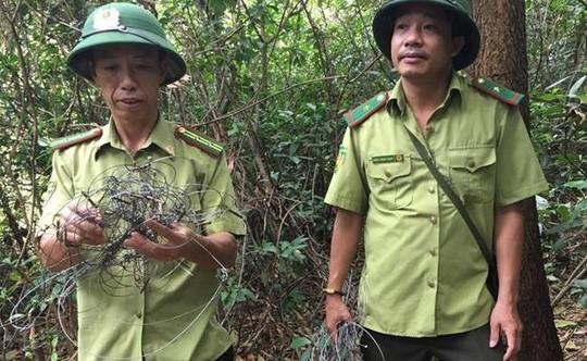 Phát hiện dầy đặc hơn 300 bẫy tận diệt thú rừng trên núi - ảnh 1