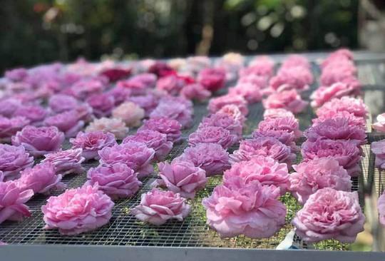 Trà hoa hồng nguyên bông 10 triệu đồng/kg, làm ra không đủ bán - Ảnh 3.