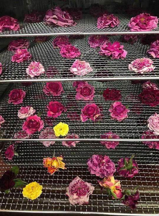 Trà hoa hồng nguyên bông 10 triệu đồng/kg, làm ra không đủ bán - Ảnh 4.