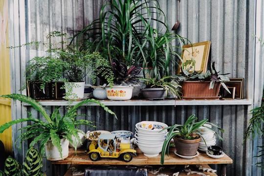 Quán cà phê đưa cả khu vườn vào trong nhà ở Đà Lạt - Ảnh 3.