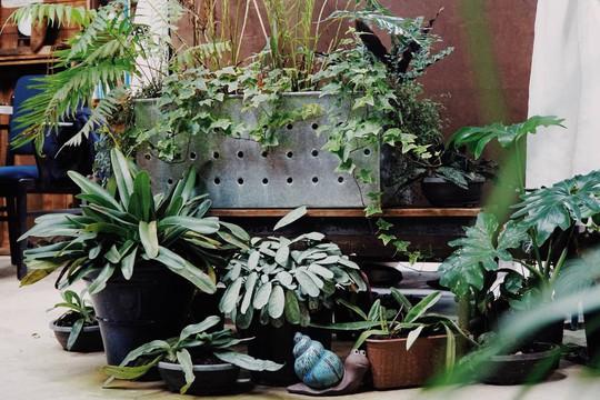 Quán cà phê đưa cả khu vườn vào trong nhà ở Đà Lạt - Ảnh 4.