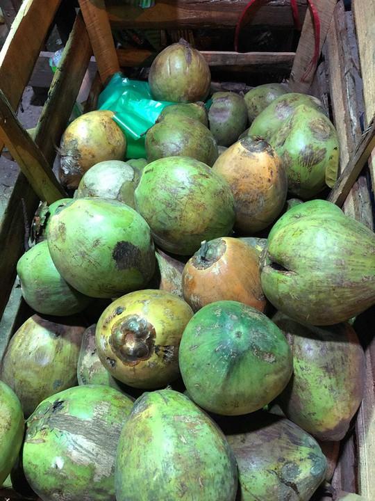 Tham rẻ mua dừa xiêm 5.000 đồng/quả, về bổ ra được 1, 2 giọt nước - Ảnh 2.