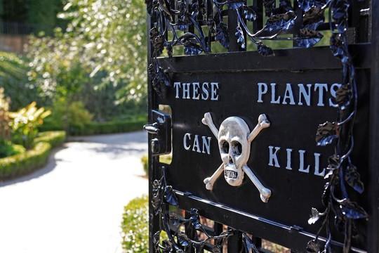 Khám phá khu vườn trồng hơn 100 loài cây độc chết người - Ảnh 3.