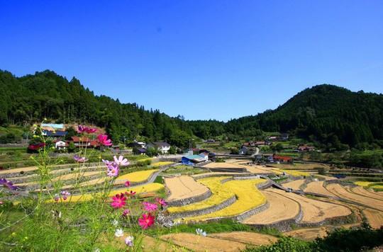 Những ngôi nhà đẹp tựa tranh vẽ ở nông thôn Nhật Bản - Ảnh 12.