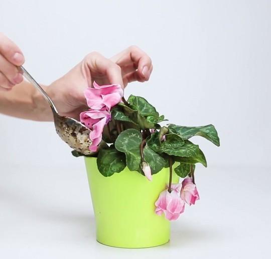 Mẹo hay giúp hoa, cây cảnh sắp chết héo trở nên tươi tốt - Ảnh 5.