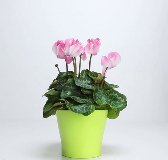 Mẹo hay giúp hoa, cây cảnh sắp chết héo trở nên tươi tốt - Ảnh 6.